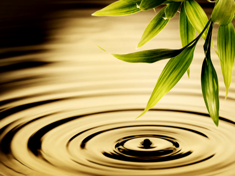 Water Ripples and Greenery